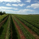 Whitewater Wines Winery